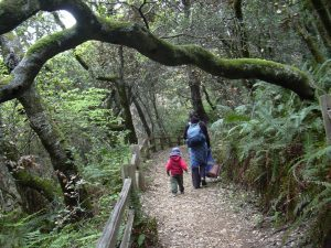 About Hummingbird Hill Playgarden Hikes